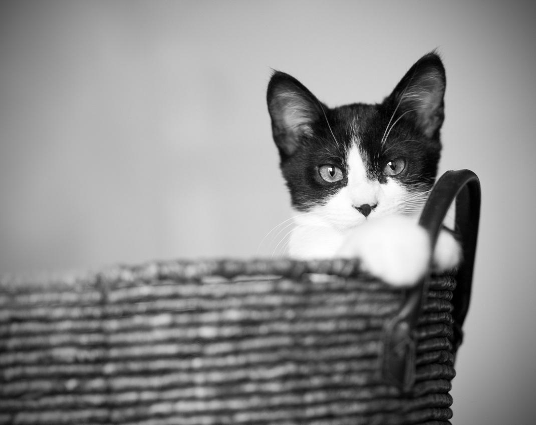 """kitten cat pet """"Captured by Karen"""""""